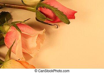 antik, agancsrózsák