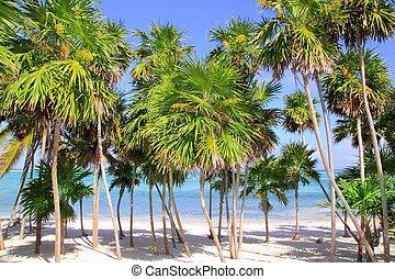 antilles, arbre, note, exotique, plage paume