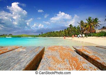 antilles, mexique, île, treesl, contoy, plage paume