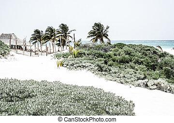 antilles, tulum, plage, parfait, mexique