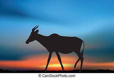 antilope, aube
