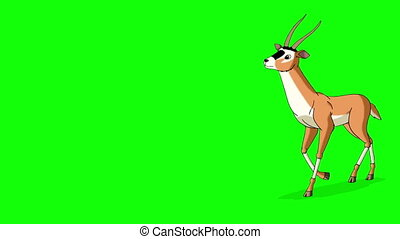 antilope, graphique, gazelle, écran, isolé, mouvement, vert, runs., animé