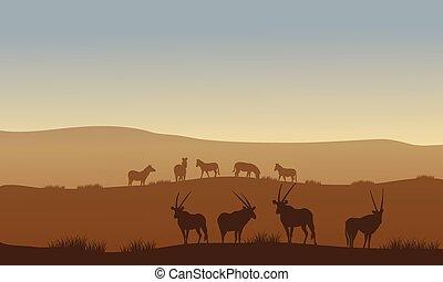 antilope, hügel, zebra
