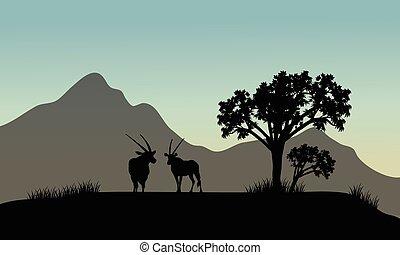 antilope, silhouette, hügel