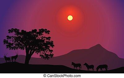 antilope, silhouette, zebra