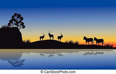 antilope, silhouette, zebra, morgen