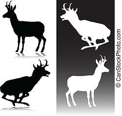 antilope, vecteur, silhouettes