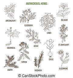 Antimicrobial herbs. Hand drawn set of medicinal plants