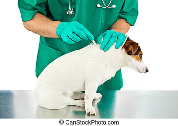 Antiparasitic cure for dog - Vet puts to dog the...