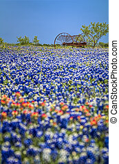 Antique farm equipment in a field of bluebonnets - Temporal...