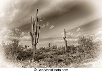 Antique image of the desert - An image of the Superstition...