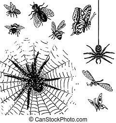 set of antique insects engravings, scalable and editable vector illustrations;