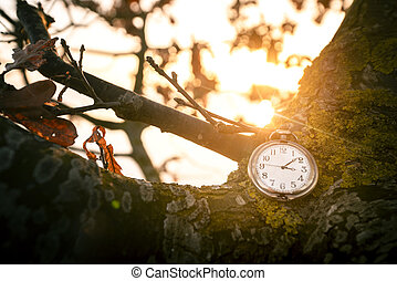 Antique pocket watch hanging on a tree