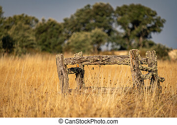 Antique wooden structure for shoeing horses and healing cows