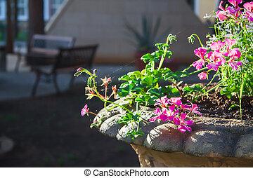 antique vase in garden for green  plants