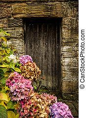 Antique wooden door and pink hortensia