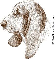 antiquité, gravure, chien de chasse, illustration, basset, tête