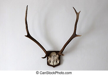 Antler as a hunting trophy