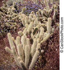 Antler cholla cactus in the californian desert