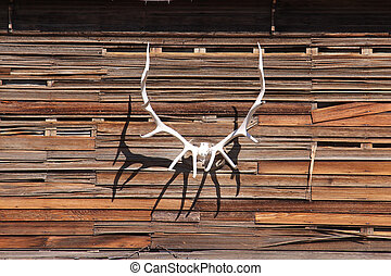 Antler on a wall