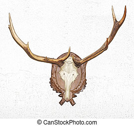 Antler on a white background.