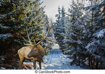 antlered, cerf, forêt, clairière, rouges