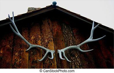 antlers, 5152
