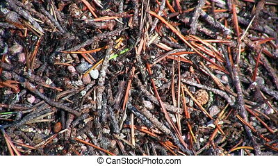 ants and anthill, close-up