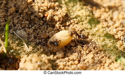 ants and egg, close-up