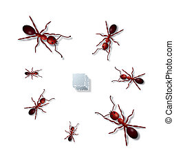 Ants and sugar