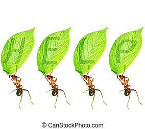 ants - Ants and leaves to help map composition