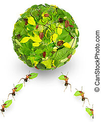 ants - Ants use leaves a earth