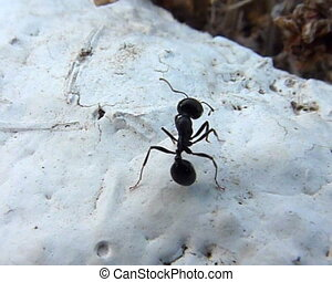 Ants. Beneficial insects.