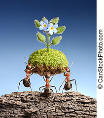 ants bring life above dead rocks - ants bring piece of...