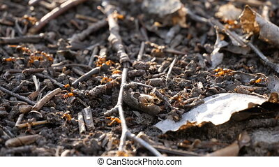Ants colony activity nest sprawl squad wild insect spring ...