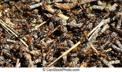 Ants colony in the forest