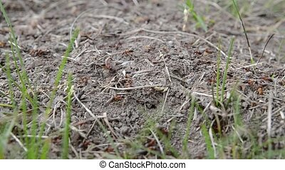 ants crawling in an anthill over a light wood texture.