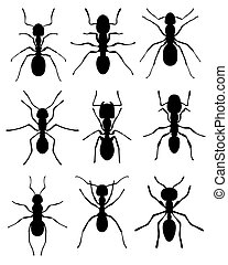 ants - Black silhouettes of ants, vector
