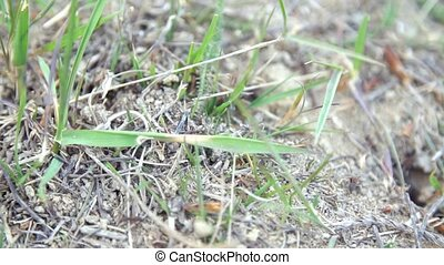ants move between blades of grass, close-up