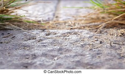 ants moving in line on the stone floor between grass against the light