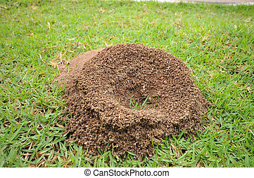 ant's nest on greensward