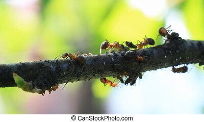 Ants on a Tree