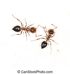 ants on a white wall. close