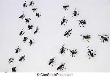 ants on a white wall . close up