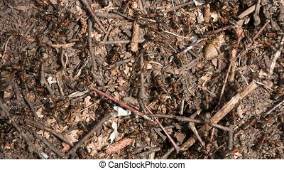 Ants on an anthill