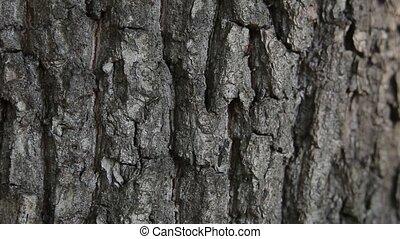 ants on the bark