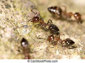 ants on the ground. close-up