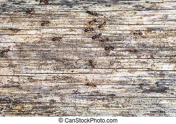 ants on the tree