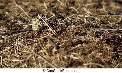 Ants running around on the nest