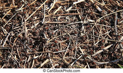 Ants running on an anthill